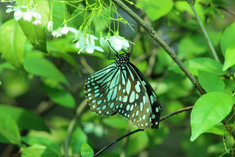 Mingle with Butterflies at Bangkok Butterfly Garden and Insectarium - Things to Do in Bangkok