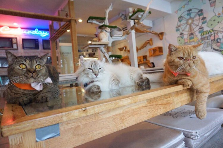 Cuddle with Cats at the Caturday Cat Café