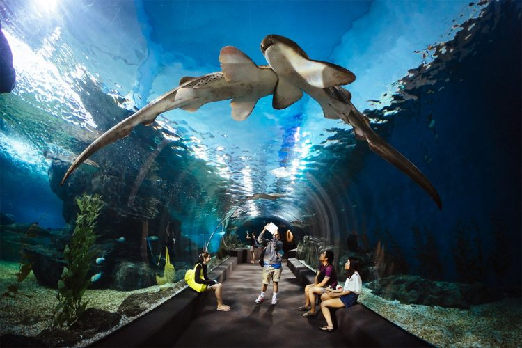 Discover the Depths at Sea Life Bangkok