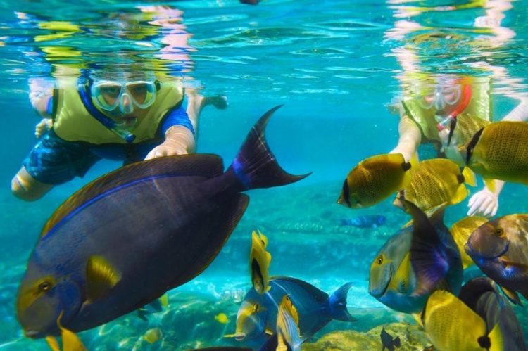 Snorkel and Experience lively marine life