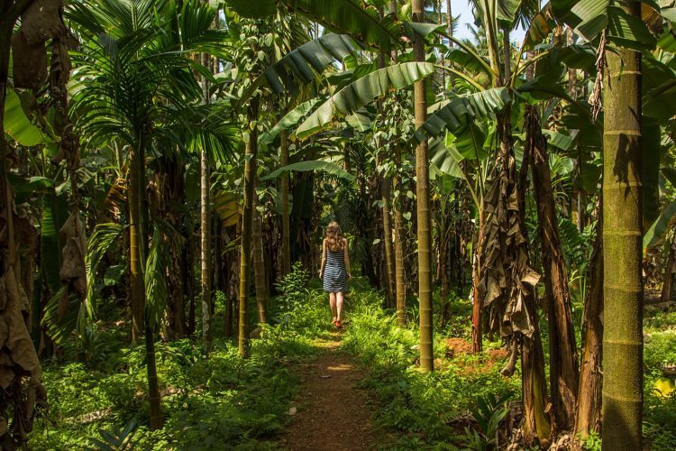 Spice Plantation - Places in Goa