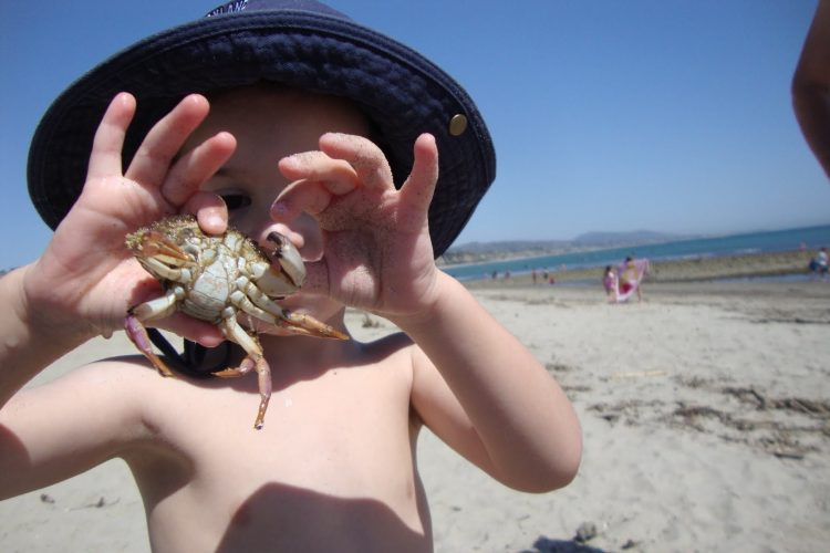 Catch some Crabs off the pristine beaches