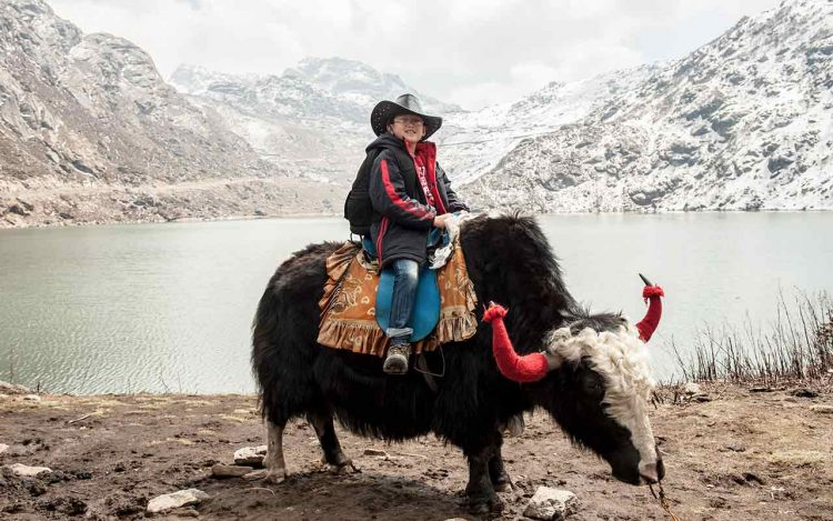 Riding Yaks at Tsomgo Lake