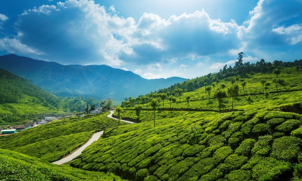 Munnar, Kerala - Most Beautiful Places in India