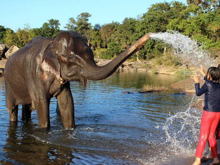 Play with local Elephants