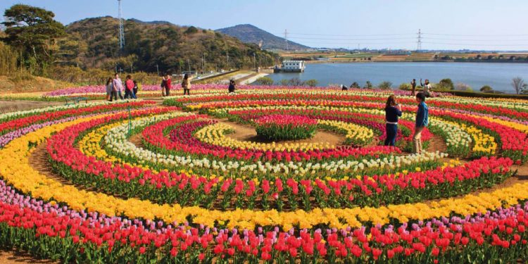 Indira Gandhi Memorial Tulip Garden - Places to Visit in Kashmir