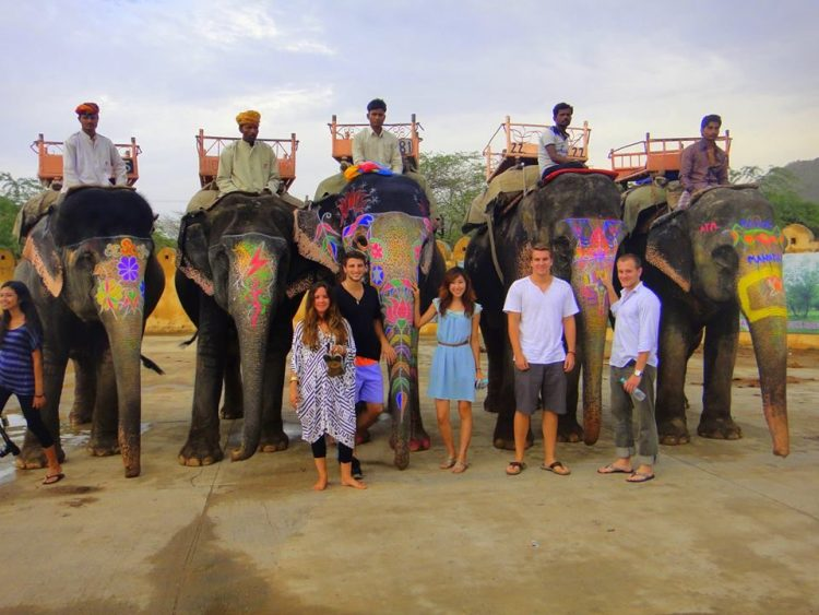 Spend a day with elephants