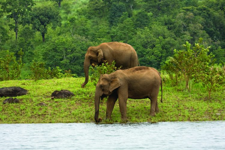 - things to do in Kerala