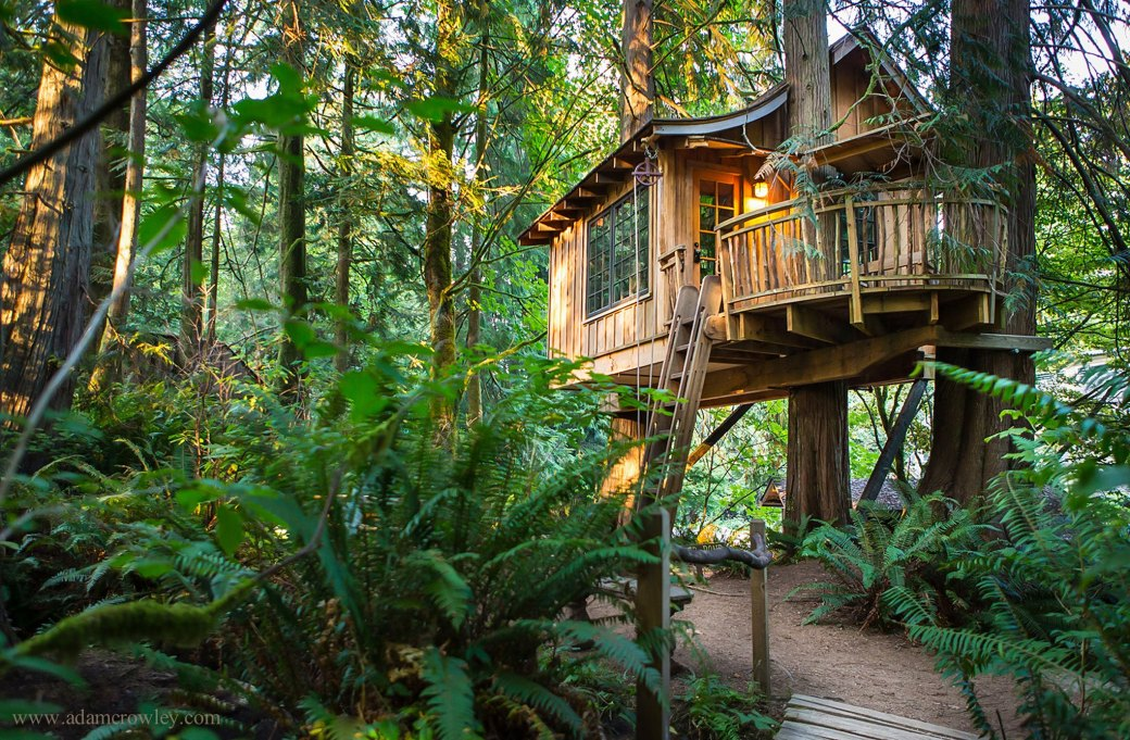 Stay at a tree house