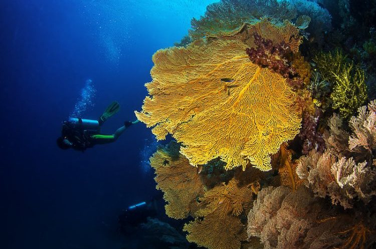 Raja Ampat Islands | 10 Things to Know as a Tourist