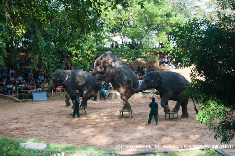 Go on a little adventure at Dehiwala Zoological Garden