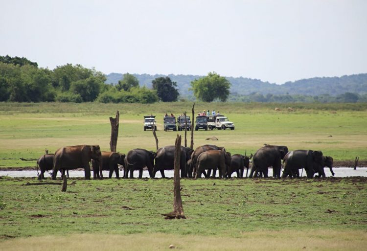 Feed Wild Elephants in The Middle of the Road