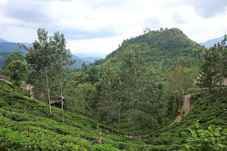 Ella - Places to Visit in Sri Lanka