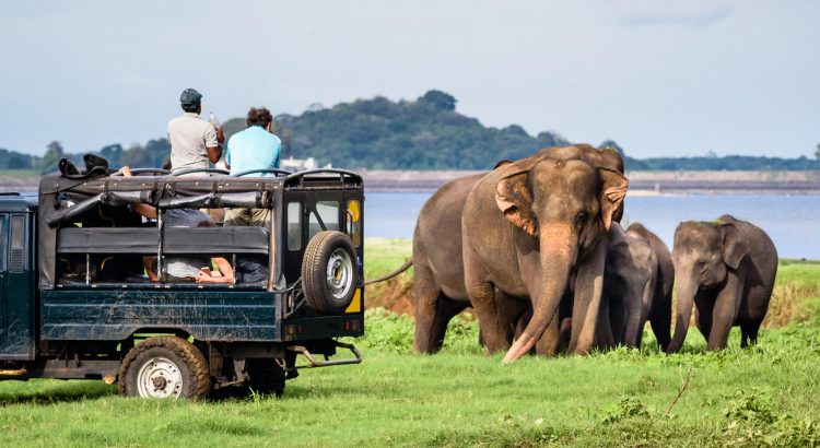 Yala National Park - Places to Visit in Sri Lanka