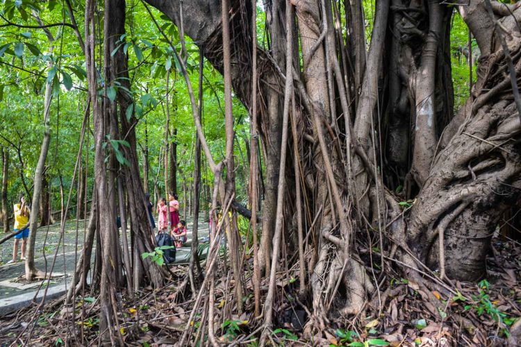 Arroceros Forest Park -Places to Visit in Manila