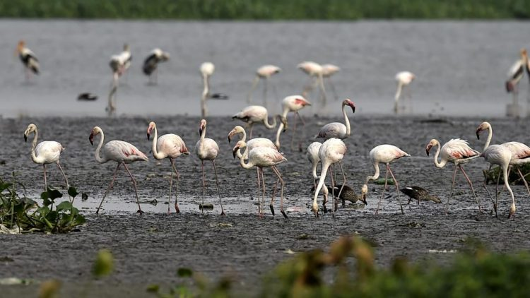Okhla Bird Sanctuary - Places to Visit in Delhi