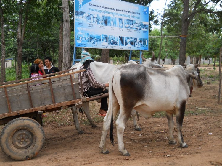 Ride a Cow Cart