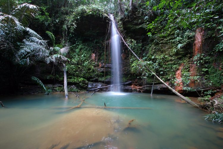 Explore the well-liked Lambir Hills National Park