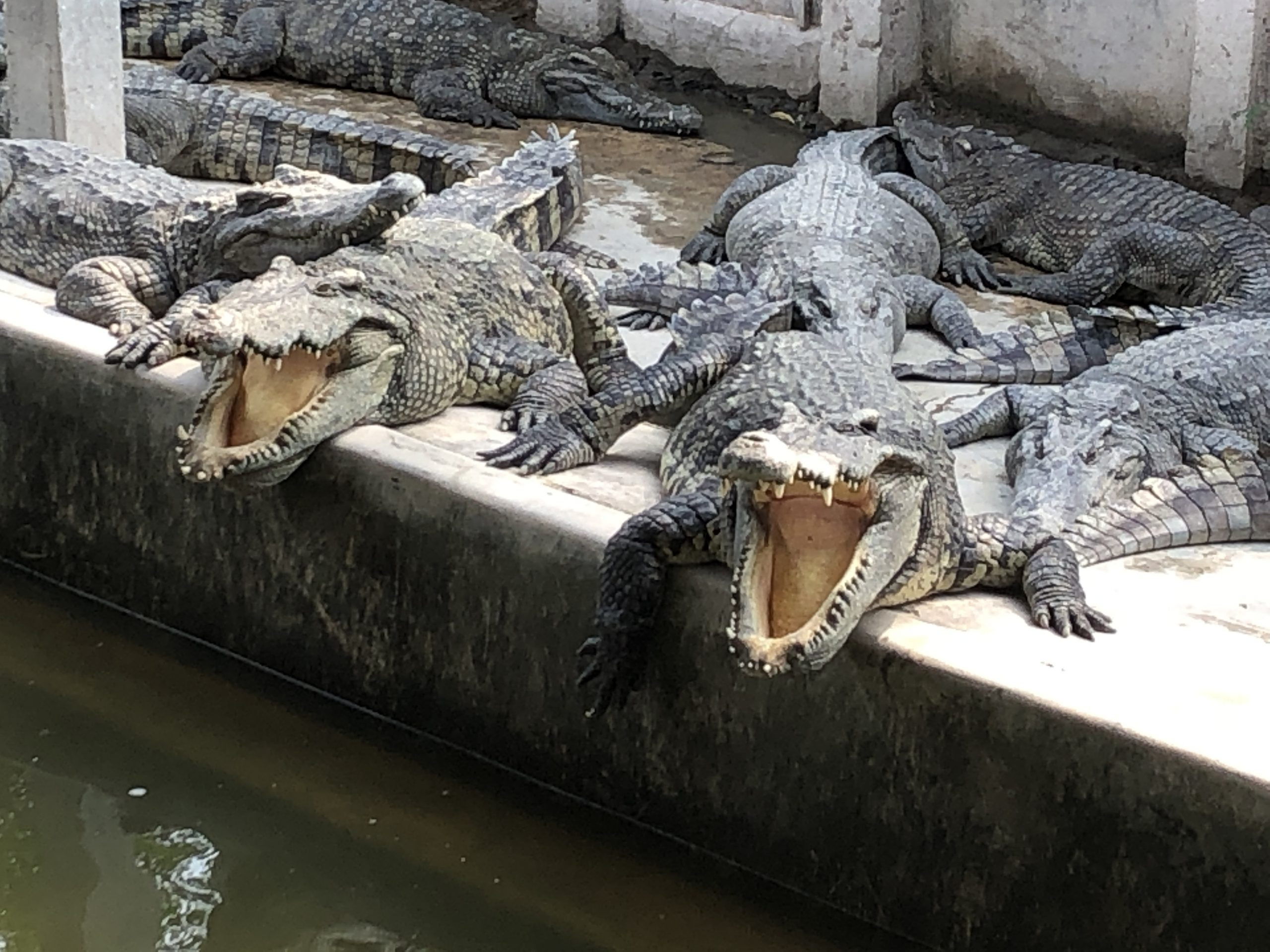 Overview of Crocodile Farm