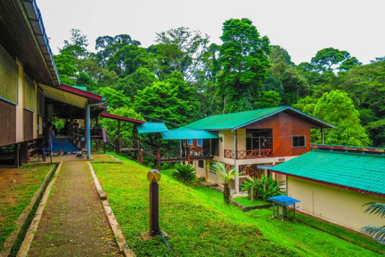 Borneo's ecology at Danum Valley Field Center