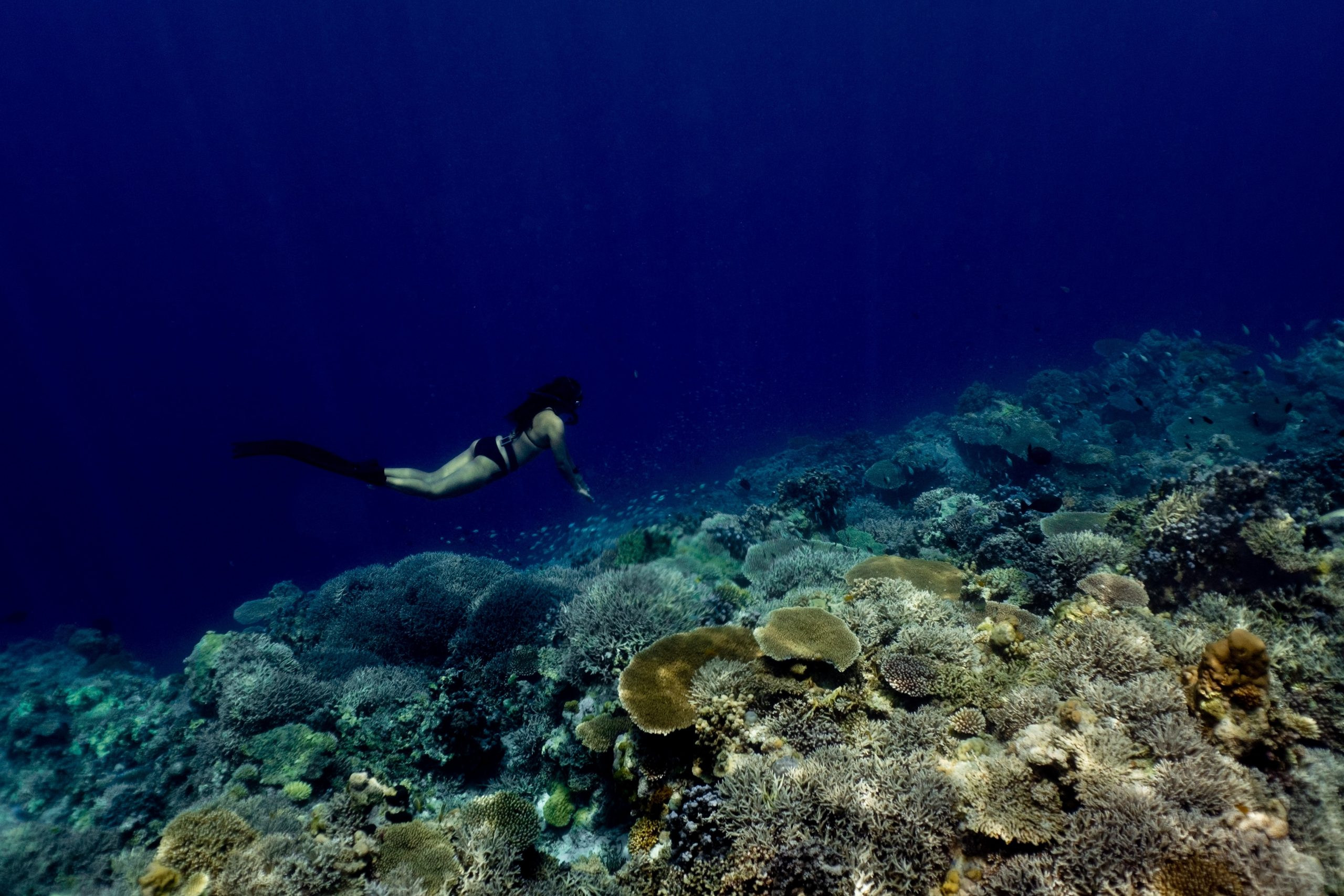 Try snorkeling at Apo Reef
