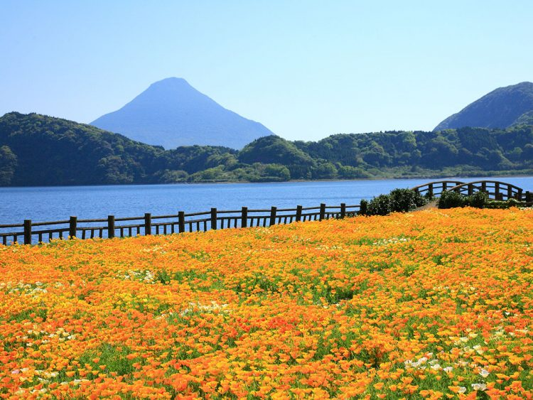 Lake Ikeda - Things to Do in Kagoshima