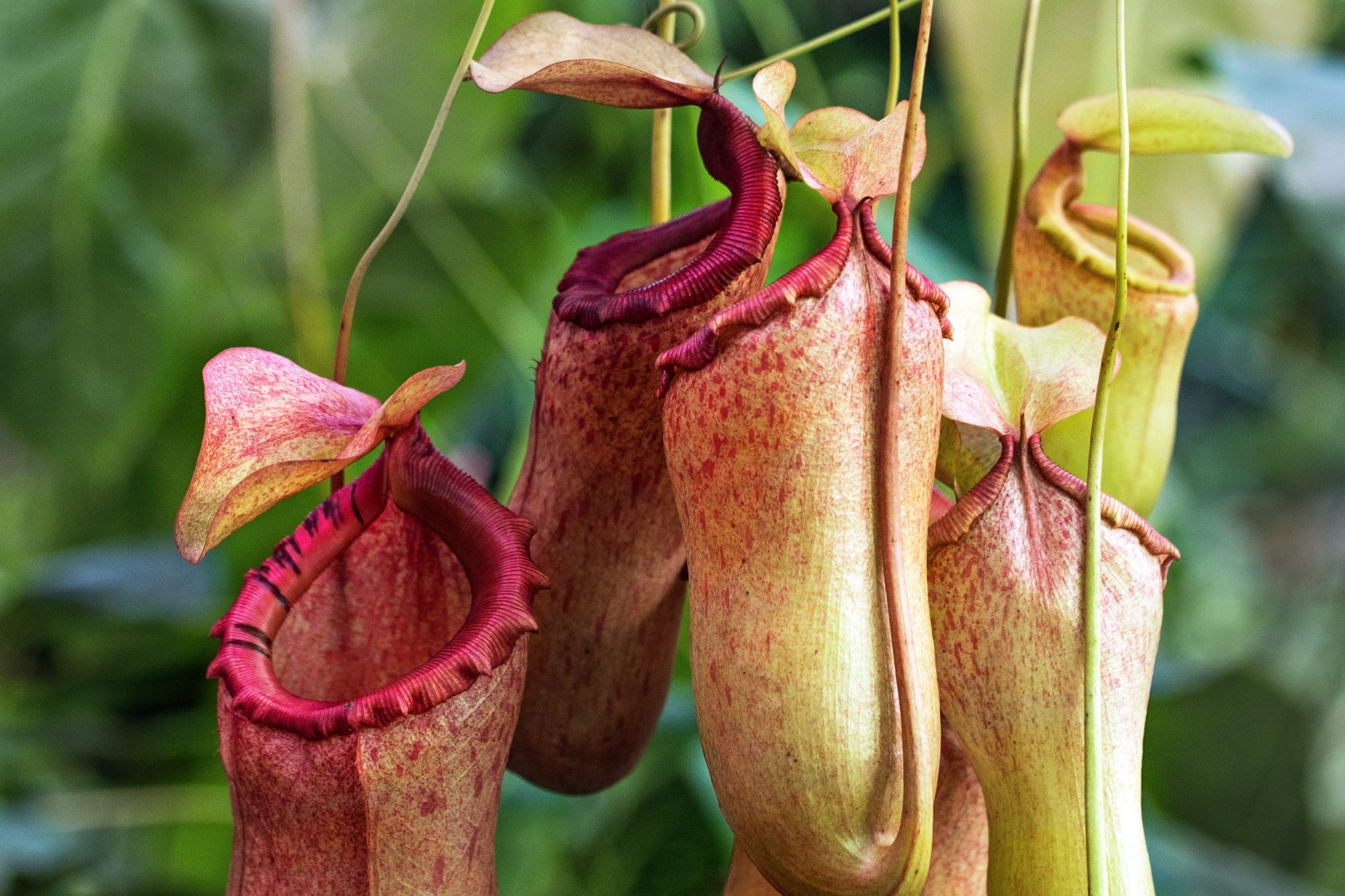 Check out the foul-smelling Rafflesia and insect-eating pitcher plants