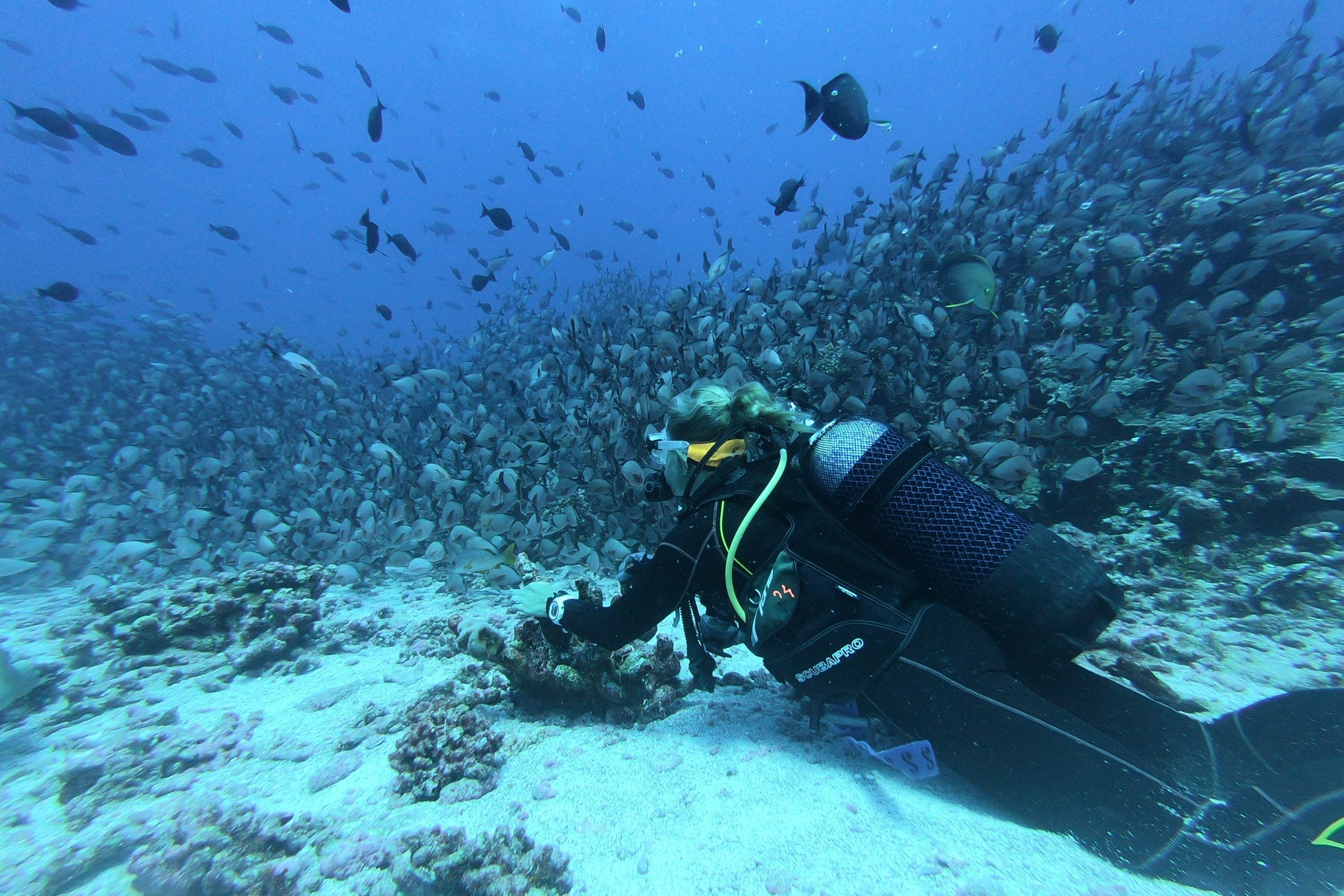 Try scuba diving at Sabang - Things to Do in Mindoro