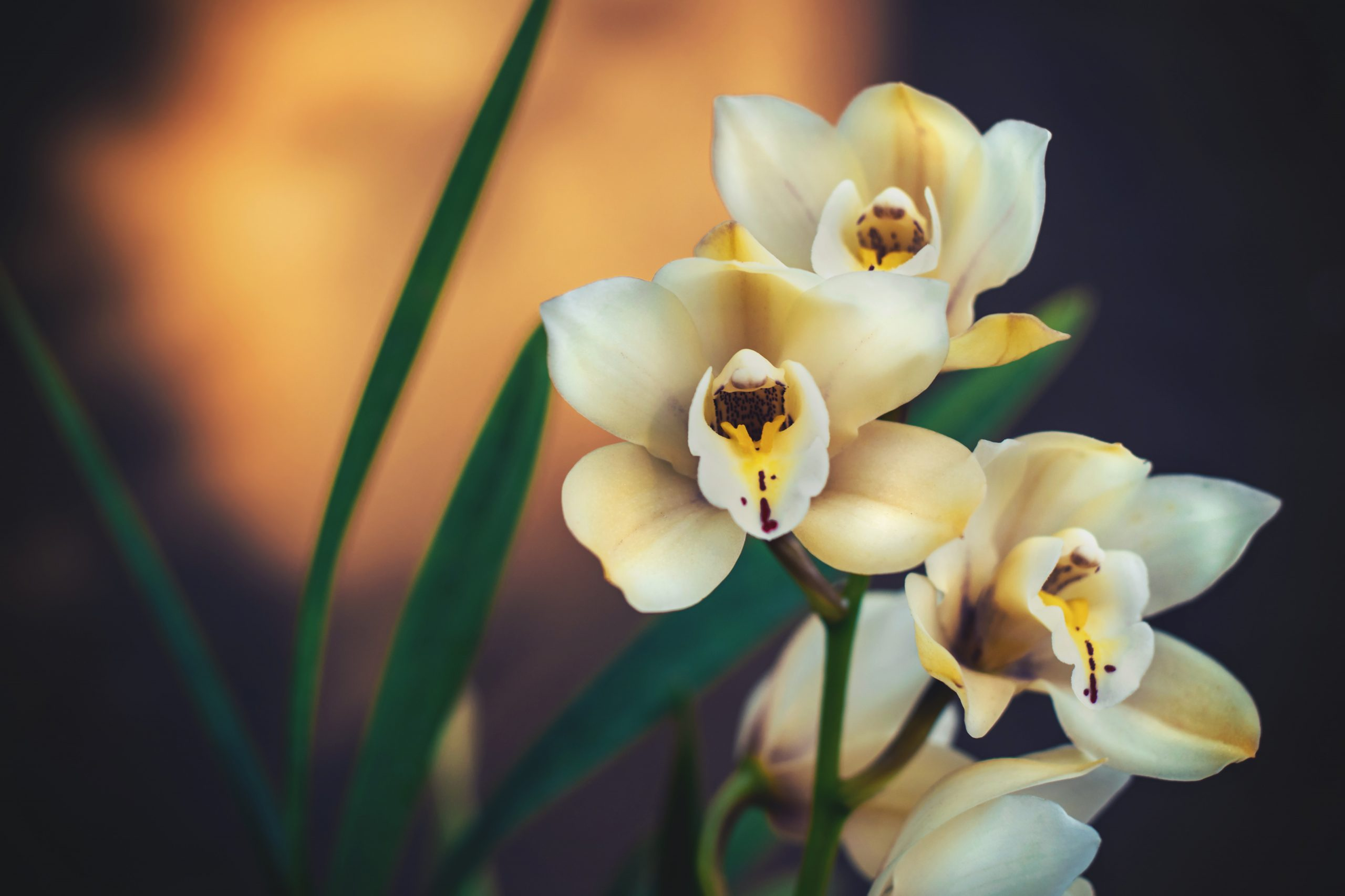 Look for Malaysia's most famous flower - Ecotourism in Malaysia