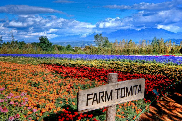 Tomita Farm | 10 Best Things to do in Furano